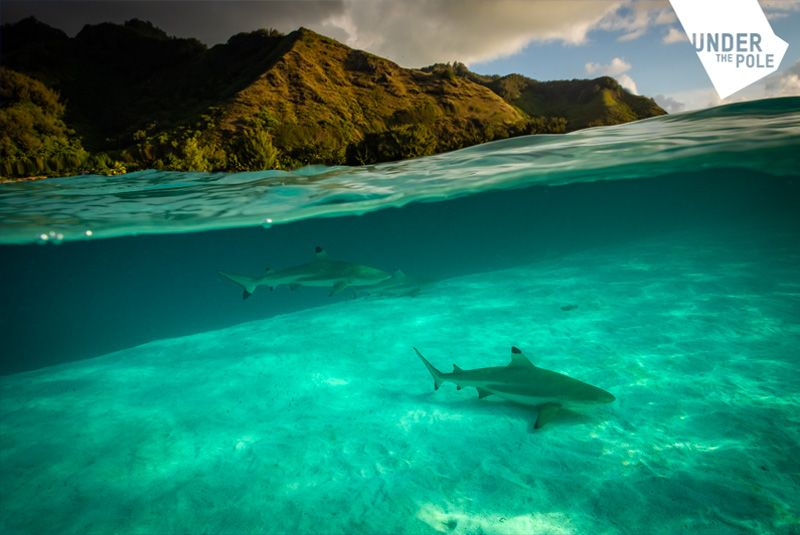 under_the_pole_polynesie_requin-compressor
